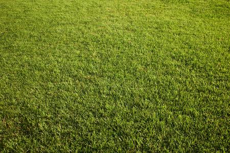 grass background: Grass , Tuscany hills Stock Photo