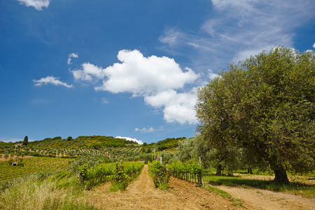 agriturismo: Tuscany Hills and Countryside in SIenna region, Italy