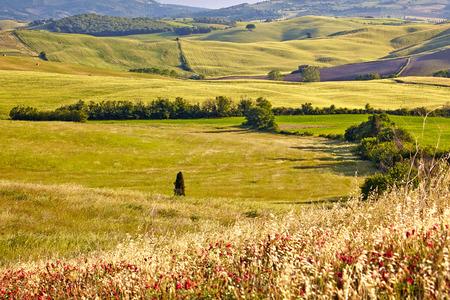 san quirico: Countryside, San Quirico d Orcia , Tuscany, Italy