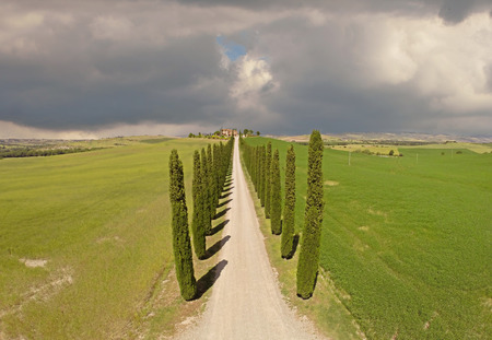 Tuscany cypresses  from sky view photo