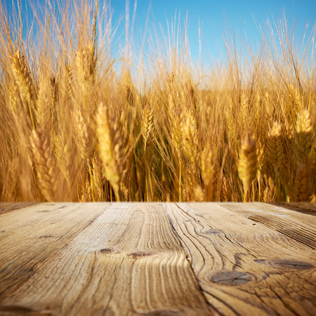 Empty wooden deck over wheat field background  photo