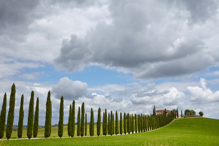 Avenue of cypresses photo