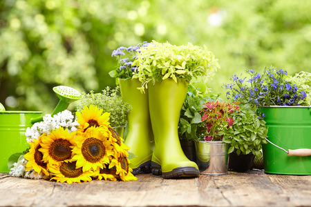Outdoor gardening tools and flowers  Stock Photo