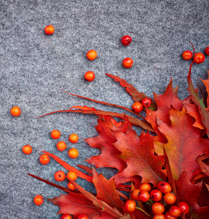 Autumn background . Rowan and leaves photo