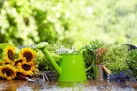 雨の中でのガーデニング ツール 写真素材