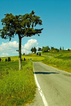 seson: Country road in Tuscany, Italy