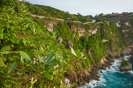 view of a monkey cliff in Bali Indonesia photo