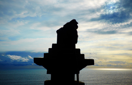 silueta mono: Silueta del mono contra el fondo del oc�ano. puesta del sol