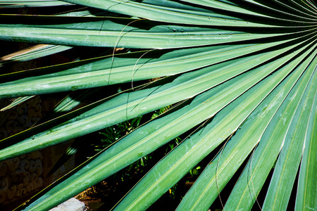 palm leaf structure photo