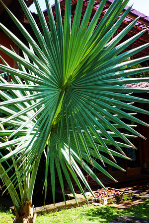 nervure: palm leaf structure Stock Photo
