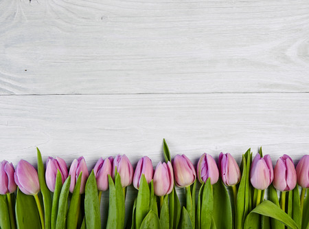 Pink tulips on white wooden background, banner