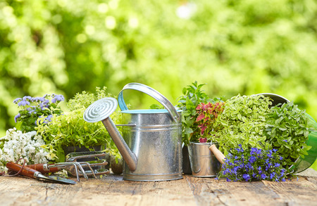 gardening: Outdoor gardening tools on old wood table
