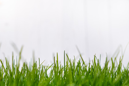 grass border: White Wooden background with green grass border