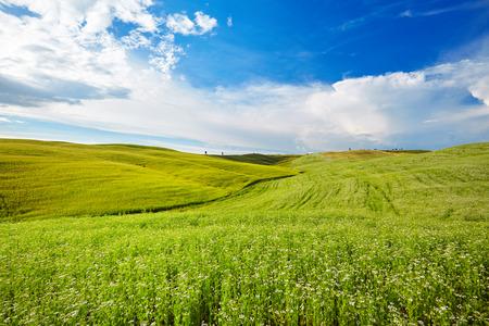 sunny day: hills in sunny day Tuscany, Italy