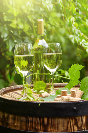 white wine: Garden with white wine and bottles