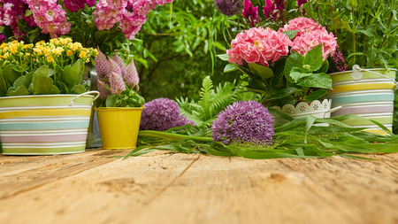 primulas: Gardening tools and planting  flower
