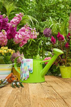 primulas: Gardening tools and planting flowers