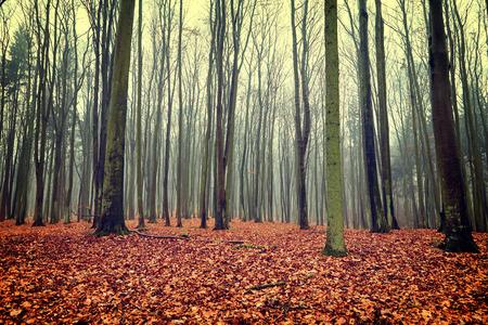 autumn forest: Foto d'epoca del bosco in autunno
