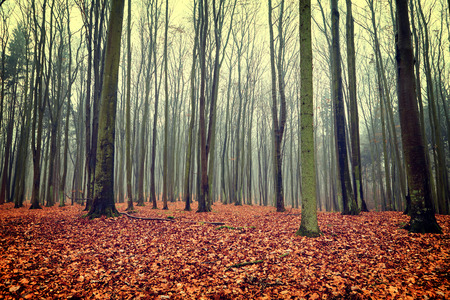 autumn path: Vintage photo of autumn forest Stock Photo