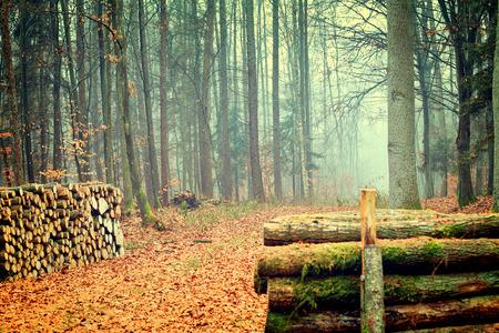 autumn forest: Vintage photo of autumn forest Archivio Fotografico