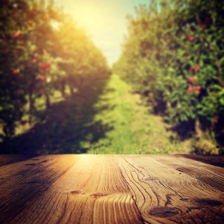 autumn apple orchard background Foto de archivo