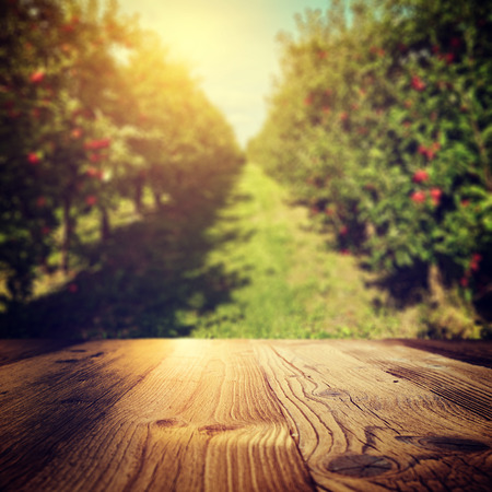 naranja: fondo huerta manzana otoño