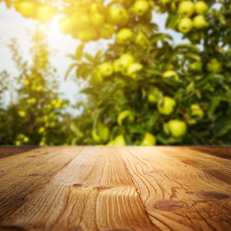 autumn apple orchard background Archivio Fotografico