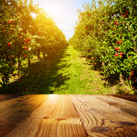 autumn apple orchard background Stock Photo