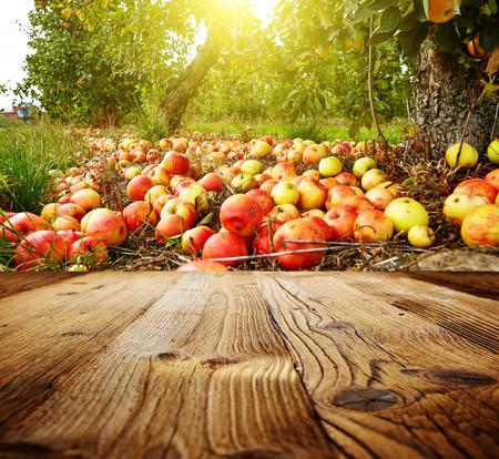 autumn apple orchard background Stockfoto