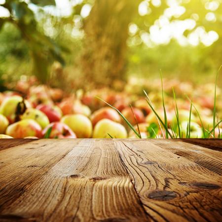 rusty: autumn apple orchard background Stock Photo