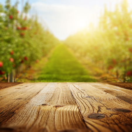 harvest: table space and apple garden of trees and fruits Stock Photo