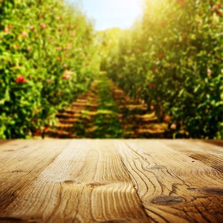 arboles frutales: espacio de mesa y jardín de la manzana de los árboles y frutas