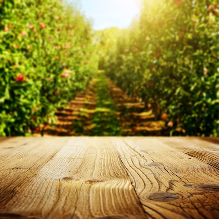 Tabellenbereich und Apfelgarten von Bäumen und Früchten