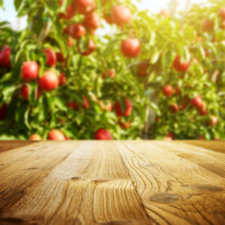 orchards: table space and apple garden of trees and fruits Stock Photo