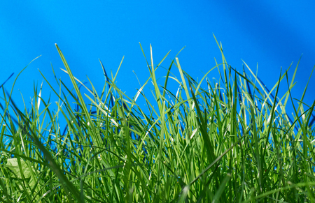 Fresh spring green grass and blue background