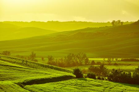 tree farming: Tuscany hills
