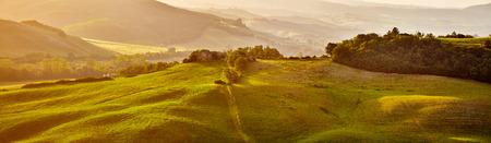 tree farming: Tuscany hills, panorama shoot