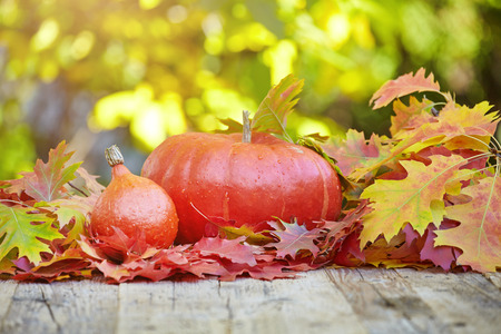 autumn garden: pumpkin and squash in an autumn garden with colorful golden foliage on the trees standing on an old wooden table with red and yellow fall leaves, with copyspace
