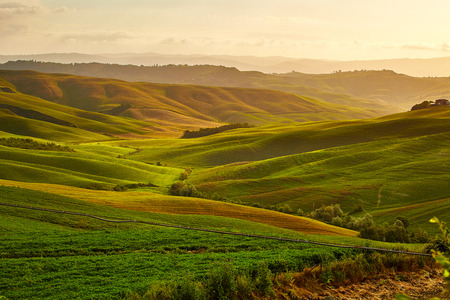 meadow: Beautiful view of green fields and meadows at sunset in Tuscany Stock Photo