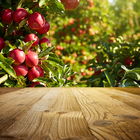 가을 사과 과수원의 배경 스톡 콘텐츠
