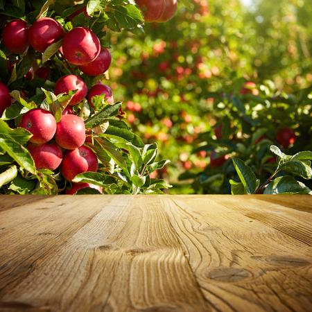 autumn apple orchard background Standard-Bild