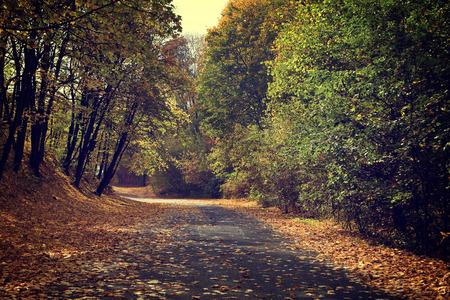 vintage photo: Vintage photo of autumn forest Stock Photo