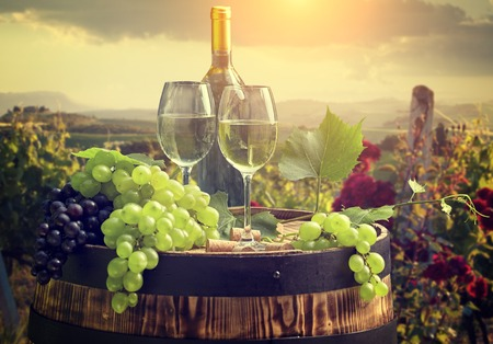 bebiendo vino: Vino blanco con el barril el viñedo en Chianti, Toscana, Italia