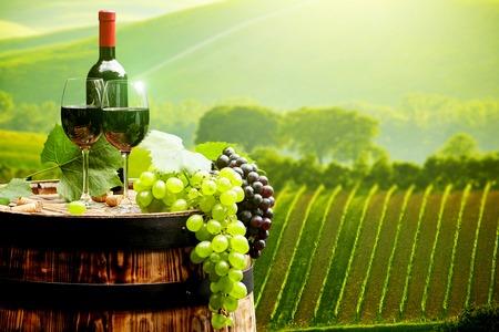 tomando vino: Vino rojo con el barril en la viña en verde Toscana, Italia