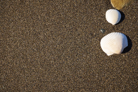 pebbles: Background dark sand with a seashell