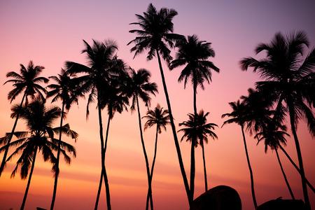 sun beach: Tropic vew of beautiful coral sunset