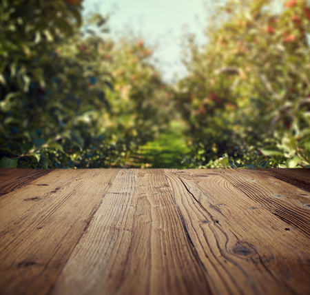 arboles frutales: table space and apple garden of trees and fruits Foto de archivo