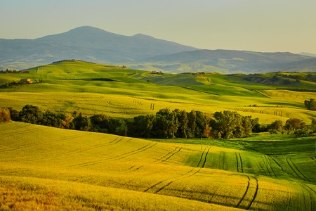 land management: Beautiful view of green fields and meadows at sunset in Tuscany Stock Photo