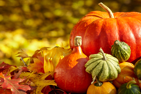 Herbst-Saison Dekoration mit Kürbis und Laub Ahornblätter