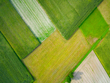 top down: Aerial view of a field. Autumn season.